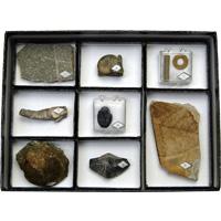 動物植物化石標本 2402-102 8種×1組 ニチカ 理科 教材 化石 標本 理科 教材 学校 学習 自由研究