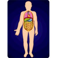 人体 サイエンスチェンジングカード 人体の学習 理科 教材 人体 体 骨格 筋肉 内蔵 理科 教材 学校教材 カード