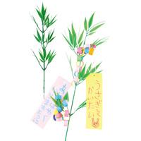 七夕用 笹 [小] 個人用 枝笹 55cm 七夕 織姫 彦星 季節 行事