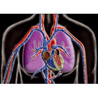 サイエンスチェンジングカード[心臓] 観察 心臓 カード 理科 夏休み 宿題 自由研究 学校教材 学習教材 アーテック