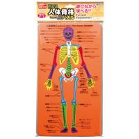 EVA人体骨格パズル パズル ゲーム 玩具 おもちゃ 人の体のしくみ 学習 理科 知育玩具