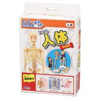 リアル人体骨格模型 アーテック 骨格 人体模型 模型 観察 体の仕組み 理科 科学 小学生 学習 夏休み 宿題 自由研究