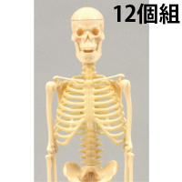 リアル人体骨格模型 12個組 092791 アーテック 理科 観察 人体 骨格 模型 小学生 学校教材 教材 学習 知育 夏休み 宿題 自由研究