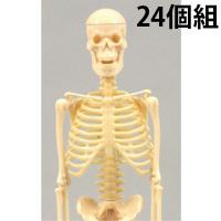 リアル人体骨格模型 24個組 092792 アーテック 理科 観察 人体 骨格 模型 小学生 学校教材 教材 学習 知育 夏休み 宿題 自由研究