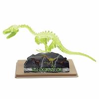 恐竜 骨格模型 組み立て ベロキラプトル スケルトン[蓄光] イーストコライト #28212 EASTCOLIGHT