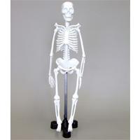 骨格モデル 46cm スタンド付き 人体模型 骨格モデル 全身標本 小学生 中学生 理科 科学 体の仕組み 理科教材 おもちゃ