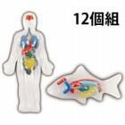 ねんどで動物の内臓作りキット 12個組 092733 アーテック