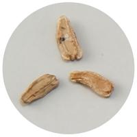 野菜の種 ヒョウタン 2737 種 たね 野菜 ひょうたんのたね ガーデニング 菜園 栽培 学習教材 理科