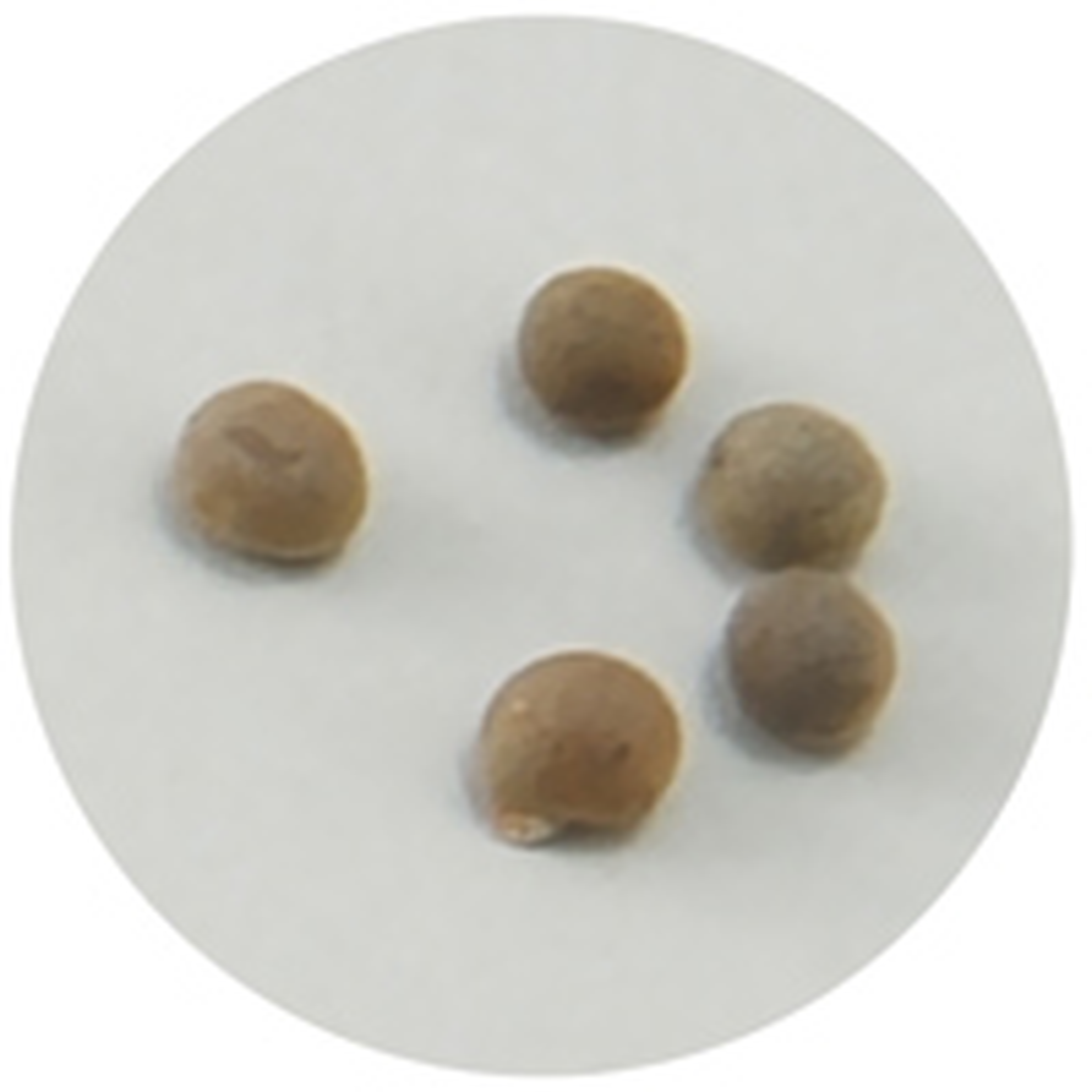 野菜の種 オクラ 2739 種 たね 野菜 おくらのたね オクラ ガーデニング 菜園 栽培 学習教材 理科