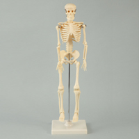 人体模型 全身 骨 42cm スタンド付 ミニ 人体骨格模型 おもちゃ 理科 観察 学校教材 学習教材 骨格標本 夏休み 自由研究
