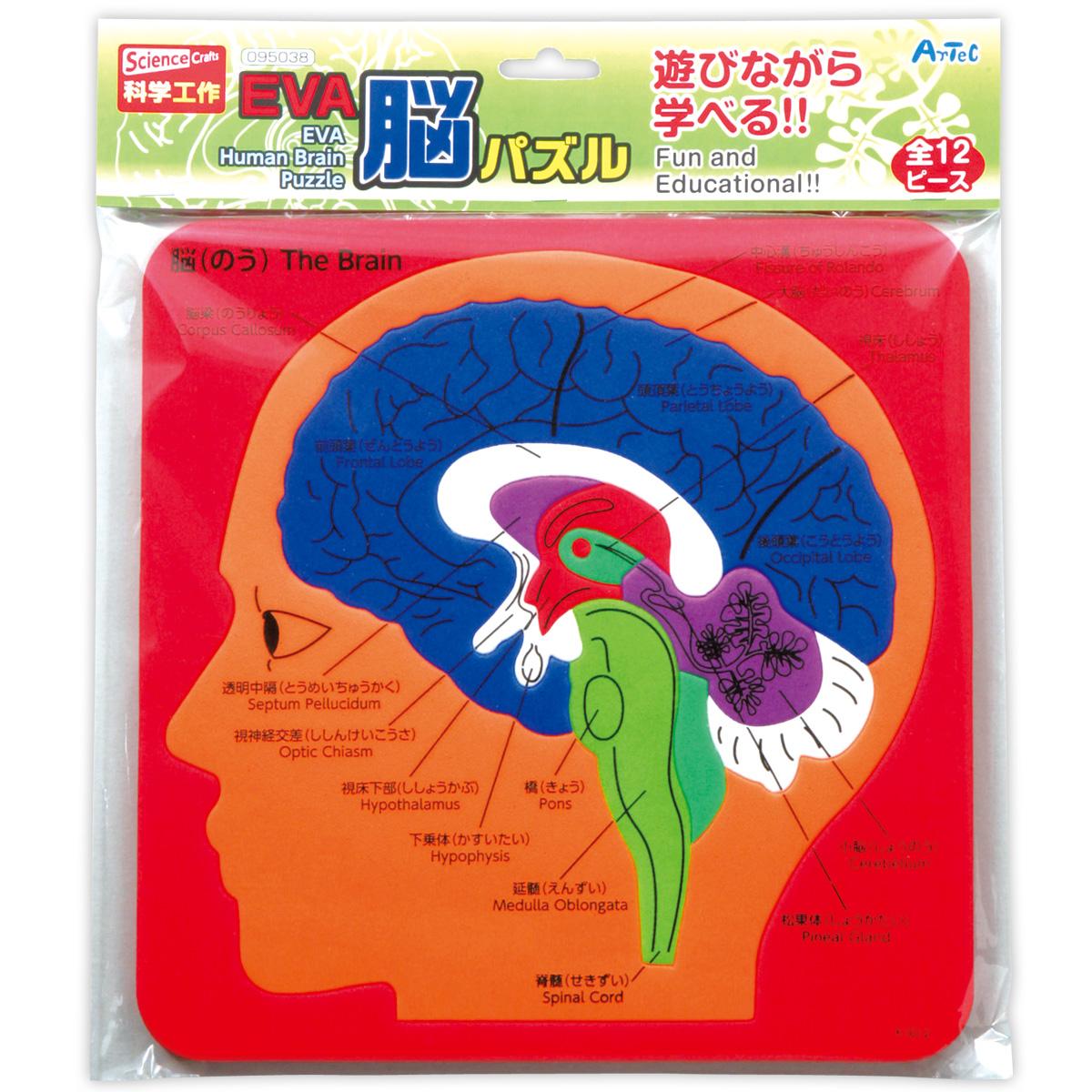 EVA脳パズル パズル ゲーム 玩具 おもちゃ 脳 人の体のしくみ 学習 理科 知育玩具 クリスマスプレゼント