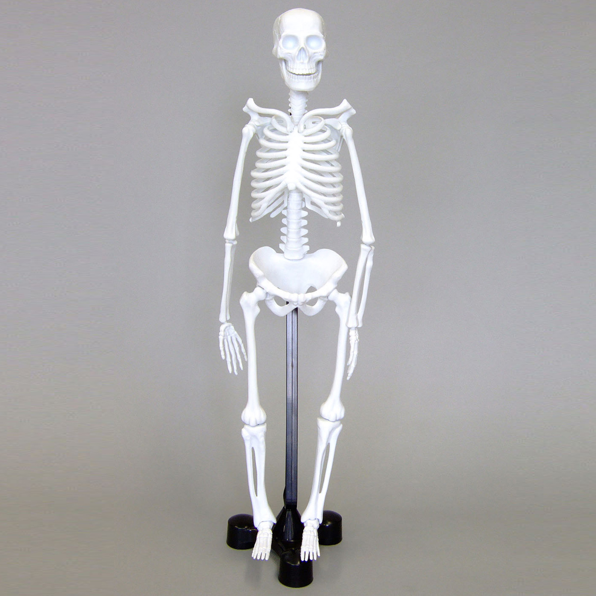 人体模型 全身 骨 46cm スタンド付き 骨格モデル おもちゃ ミニ 理科 科学 教材 小学生 全身標本 体の仕組み クリスマスプレゼント