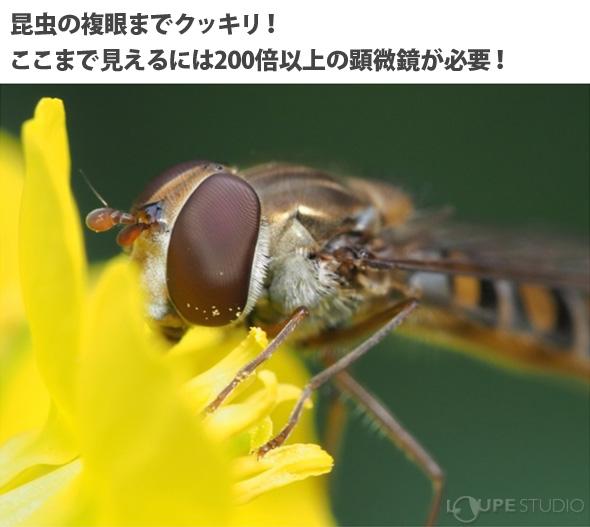 昆虫の複眼までクッキリ!